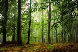 leaves forest trees nature