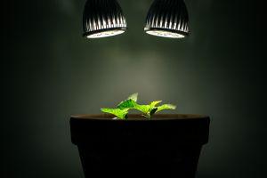 leaves lights plants