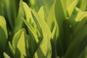 leaves macro plants grass