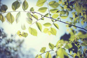 leaves macro trees nature sunlight blurred bokeh foliage branch