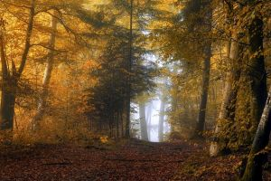 leaves mist landscape fall nature shrubs forest path trees yellow sunlight