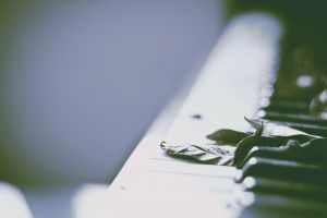 leaves musical instrument photography piano