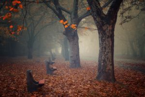 leaves nature atmosphere empty  morning landscape path mist trees park calm bench fall