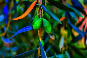 leaves olives plants trees outdoors