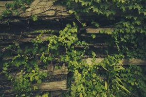 leaves plants wood green