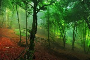 leaves red forest nature landscape mist green morning hills shrubs
