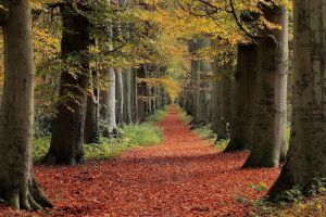 leaves red trees landscape fall nature path