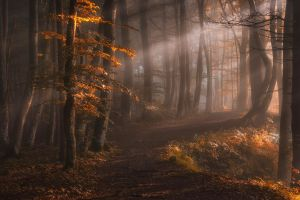 leaves sun rays sunlight trees mist landscape nature fall path forest