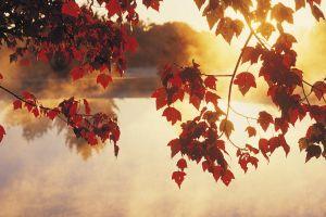 leaves sunlight lake calm