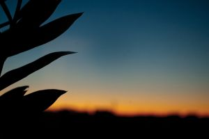 leaves sunset silhouette