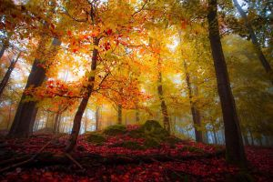 leaves trees nature colorful mist fall landscape forest sunlight