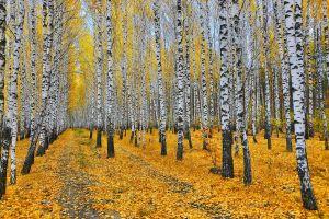 leaves trees nature fall