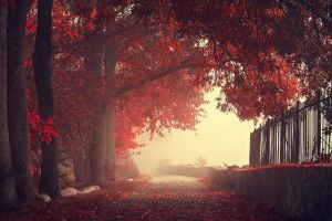 leaves trees nature fence wall red mist fall road landscape