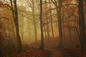 leaves trees nature landscape fall path brown mist forest red