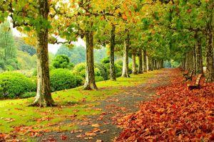 leaves trees nature