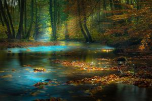 leaves water sunlight trees nature river germany landscape morning mist sun rays forest fall