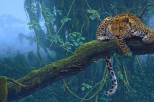 leopard (animal) branch animals trees