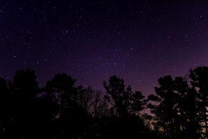 long exposure trees stars landscape night starry night
