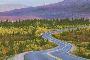 long road fall soft road nature