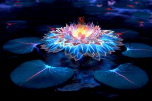 lotus flowers artwork flowers