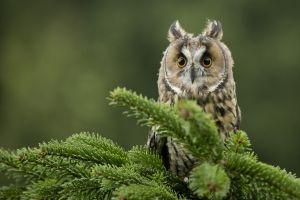 macro birds owl