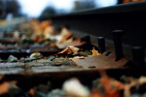 macro depth of field railway leaves