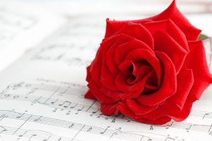 macro flowers music red musical notes red flowers rose