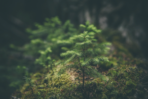 macro forest nature plants trees green