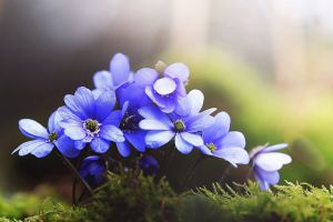 macro grass flowers blue flowers nature