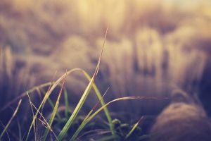 macro grass plants
