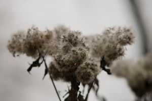 macro herbarium plants