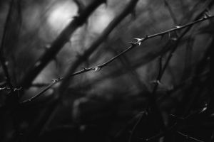 macro monochrome thorns nature