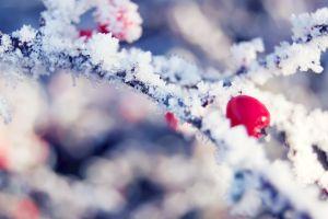 macro plants snow