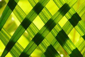macro simple pattern leaves green nature