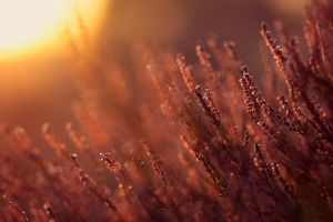 macro sunlight plants outdoors