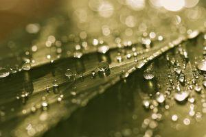 macro water drops leaves sunlight