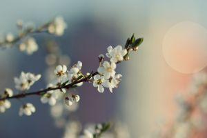 macro white flowers flowers
