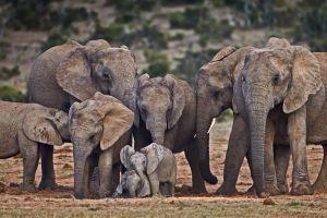mammals elephant baby animals animals