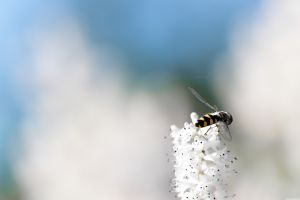 minimalism bees macro insect simple background flowers