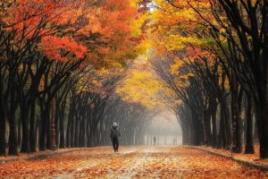 mist colorful south korea people nature tunnel park trees landscape fall leaves street