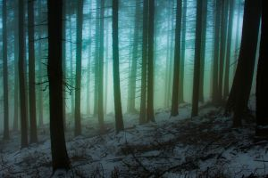 mist forest italy cold hills nature trees winter snow landscape atmosphere