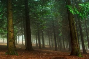 mist green nature trees landscape forest morning