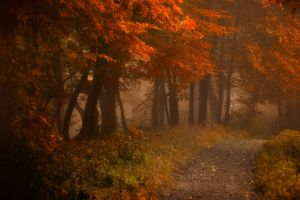 mist leaves atmosphere morning landscape shrubs path fall nature forest