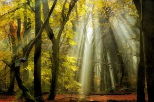 mist leaves landscape yellow sunbeams forest trees fall nature