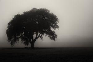 mist monochrome trees field