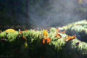 mist moss grass macro