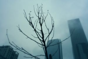 mist sky building clouds