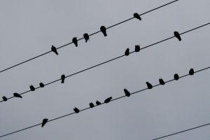 monochrome birds animals