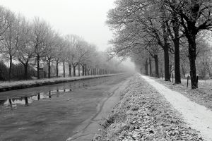 monochrome outdoors trees snow cold