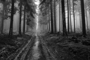 monochrome trees forest